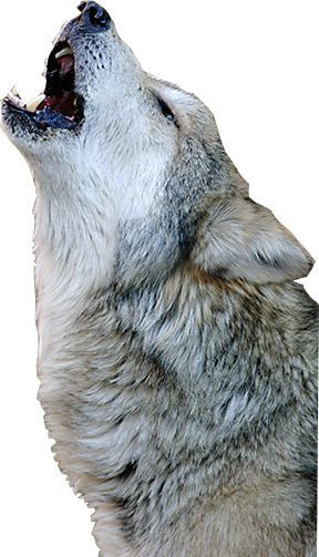 Download Png Wolf Howling Png Gif Base