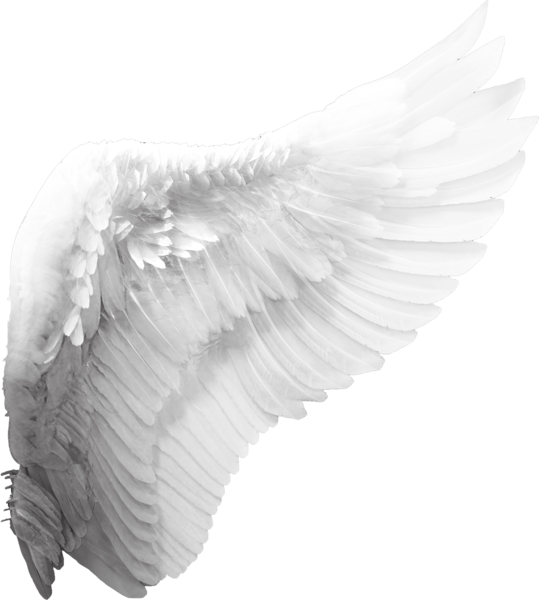 Angel Wing (PSD) | Official PSDs