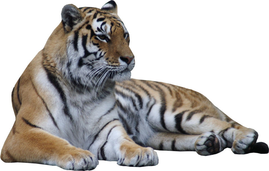 Tiger Laying Down (PSD) | Official PSDs