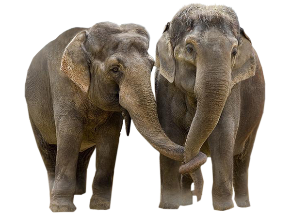 Elephants 6 Png Official Psds Over 411 elephant png images are found on vippng. elephants 6 png official psds